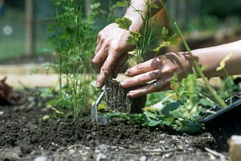 Gardening for Wellbeing
